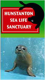 Hunstanton Sealife Sanctuary