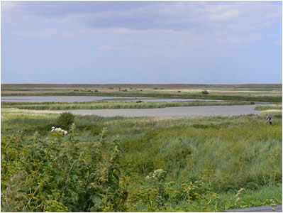 Cley Marsh View