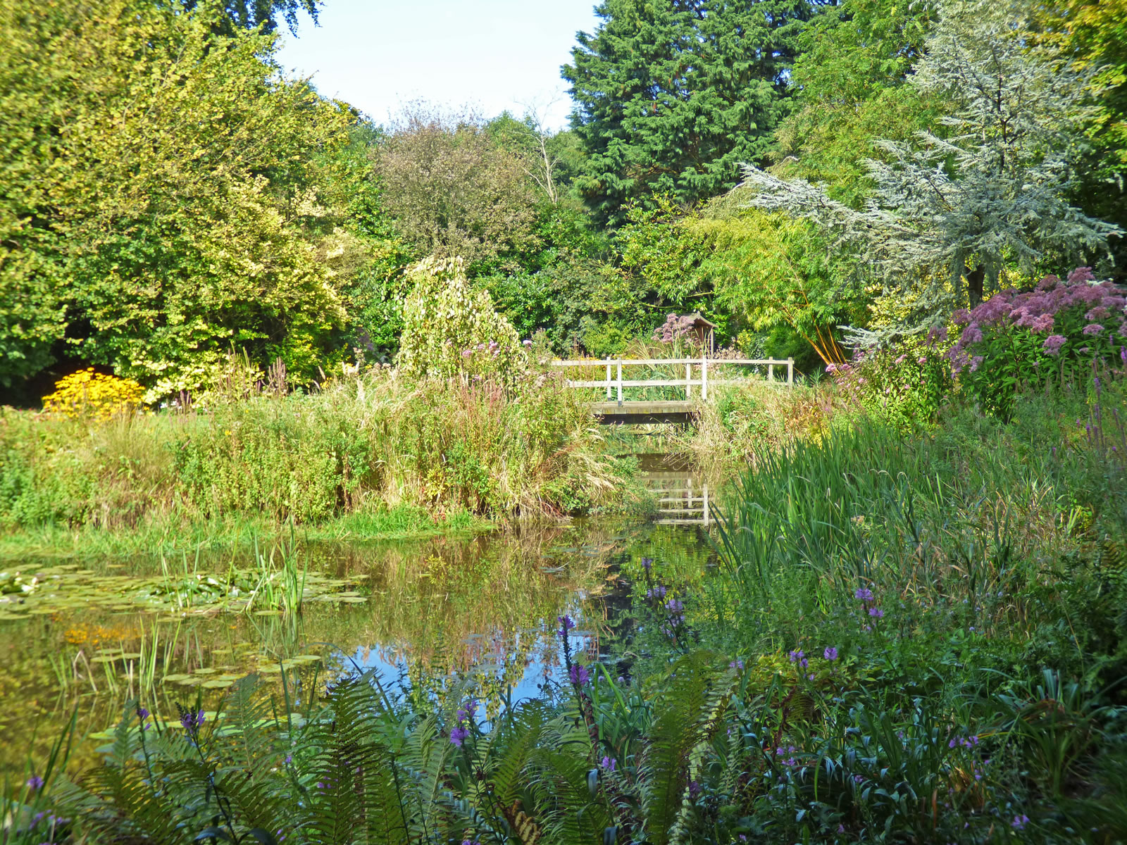 Gooderstone water garden for Liquid garden