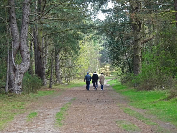 Holkham Bay Woods