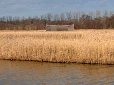 Reeds & Marshes