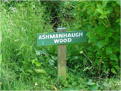 Ashmanhaugh Wood