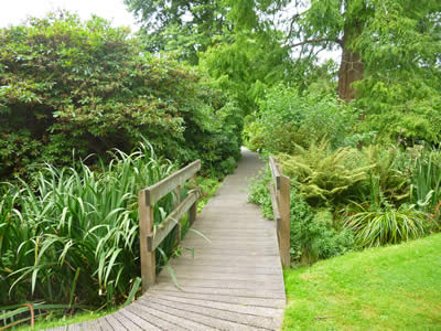 Wooden Boardwalk Paths