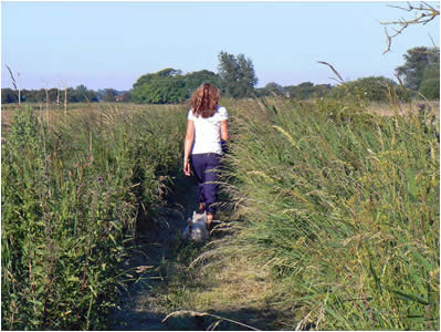 Ludham Marshes Paths