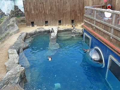 Penguin Enclosure