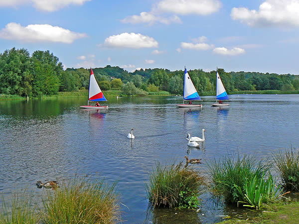 Sailing Dinghy and Wildlife on the Great Broad